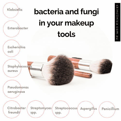 Bacteria-and-fungi-found-in-makeup-sponges-infographic