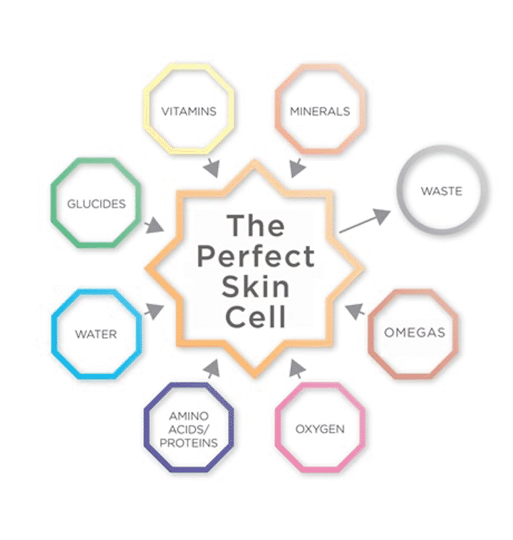 Oskia-the-perfect-skin-cell-infographic